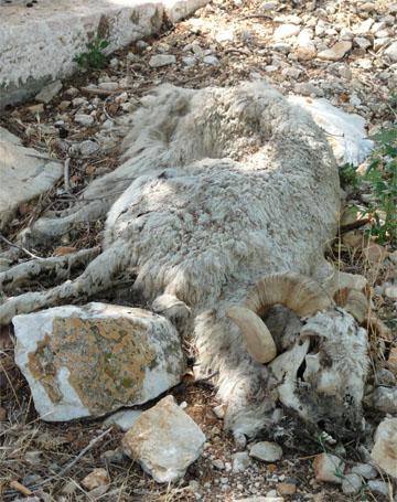 Še ena žrtev Golega otoka