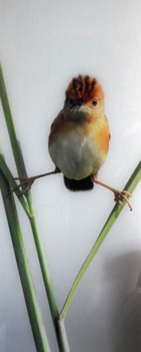 pticek.jpg